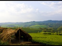 Ugandan Countryside