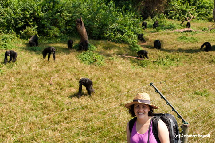 ALex with Chimps at Ngamba Island