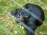Birds Eye View Of Chimp